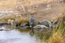 Serengeti_20