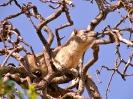 Serengeti_3