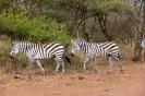 Serengeti_12