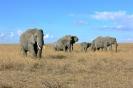 Serengeti_17