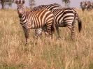 Serengeti_1
