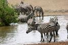 Serengeti_22