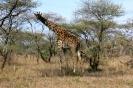 Serengeti_25